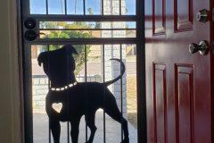 Dog-Door-